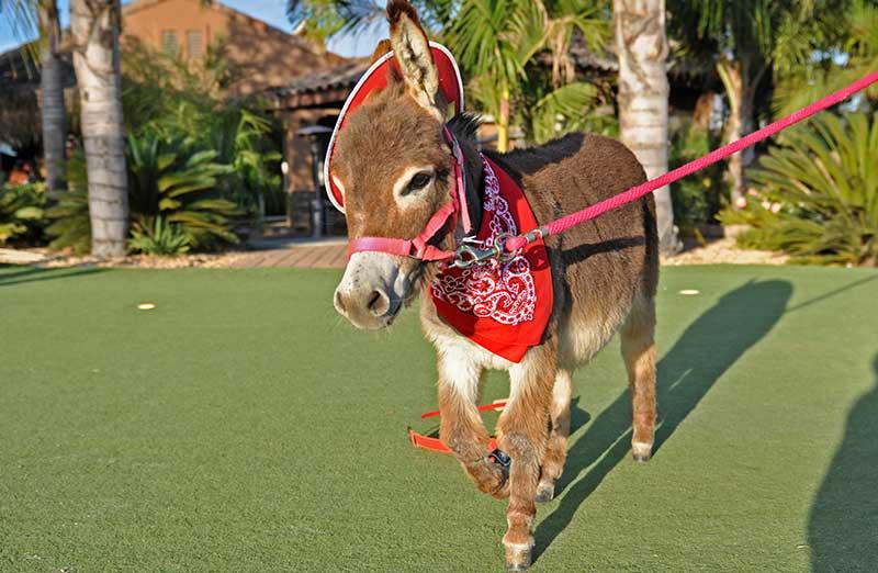 Fantasy Donkey Cowboy