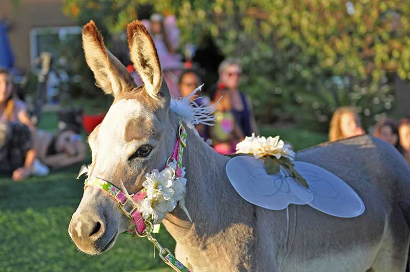 Fantasy Donkey with Fairy Wings