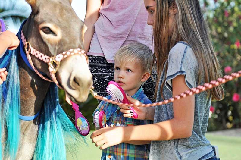 Little Boy Meeting Fantasy Donkey