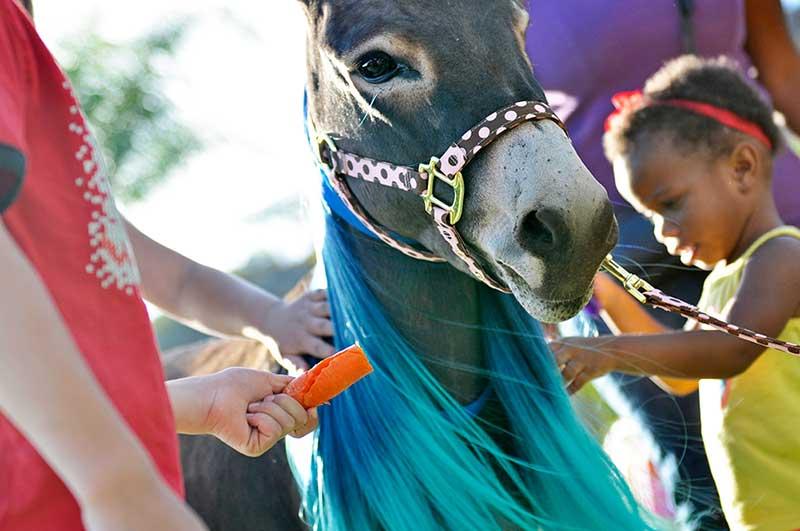 Fantasy Donkey with Blue Mane