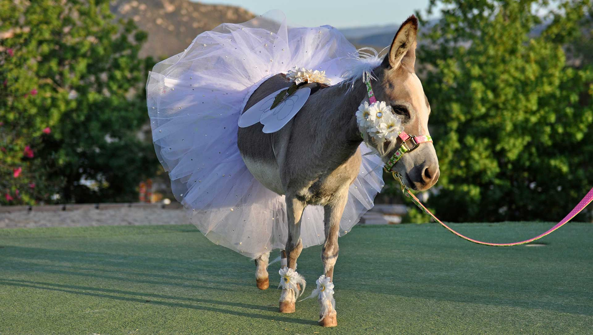 Beautiful Fantasy Donkey Bride