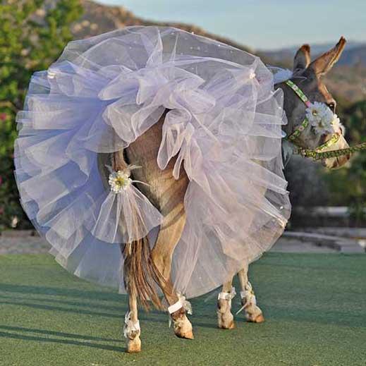 Donkey Garter