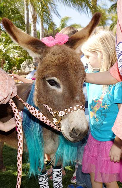 donkey with pink bow