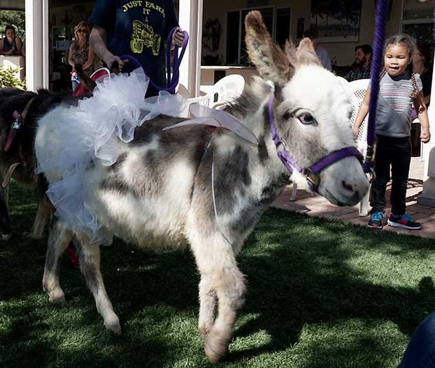 Fantasy Donkey Angel