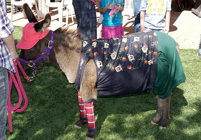 Sponge Bob Fantasy Donkey
